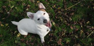 Adoptar un perro madrid