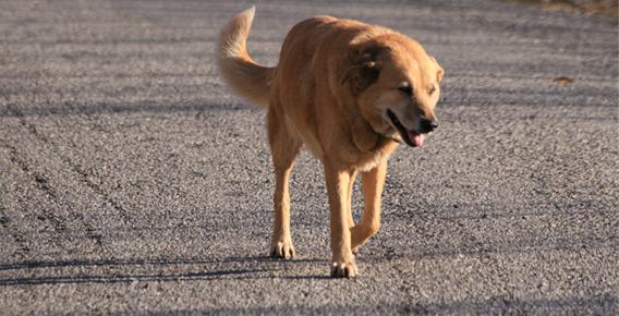 si me encuentro un perro abandonado