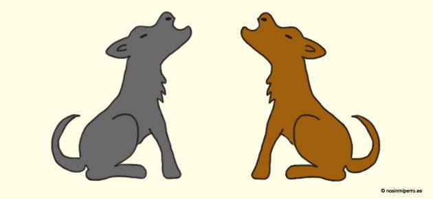 Comunicación auditiva en perros