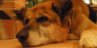 Consejos para perros viejos