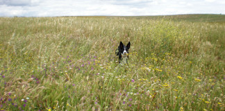 Primavera y los perros