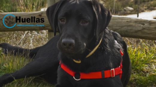 Intervención Asistida por animales
