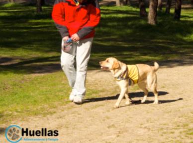 rehabilitación con animales