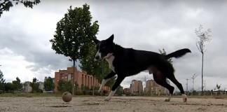Jugar con nuestro perro a la pelota