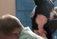 Cómo relacionarse niños y perros