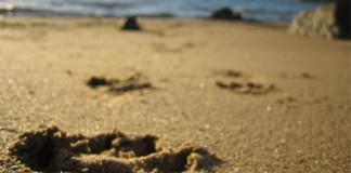 Playas que admiten perros España