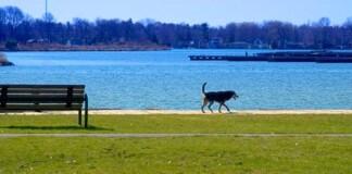Llevar al perro suelto en el parque