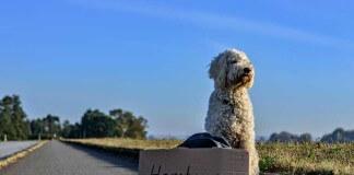 viajar con perro en avión en la bodega