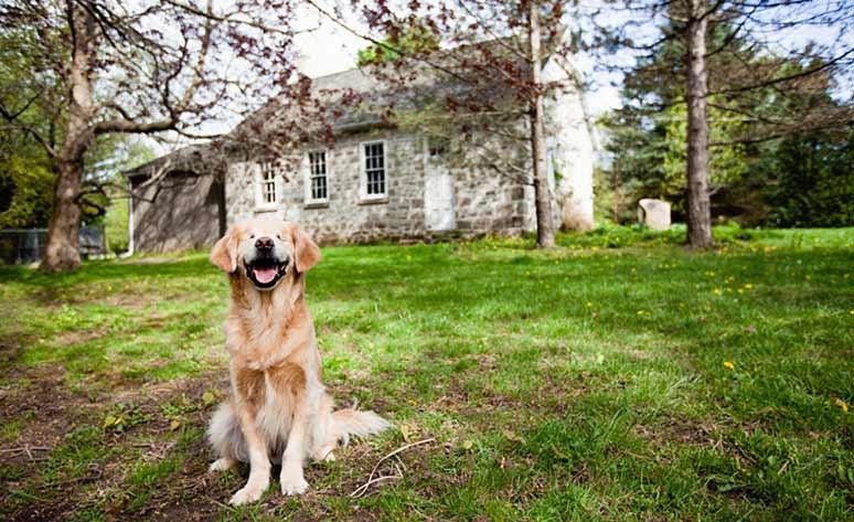 Smiley perro ciego de terapia